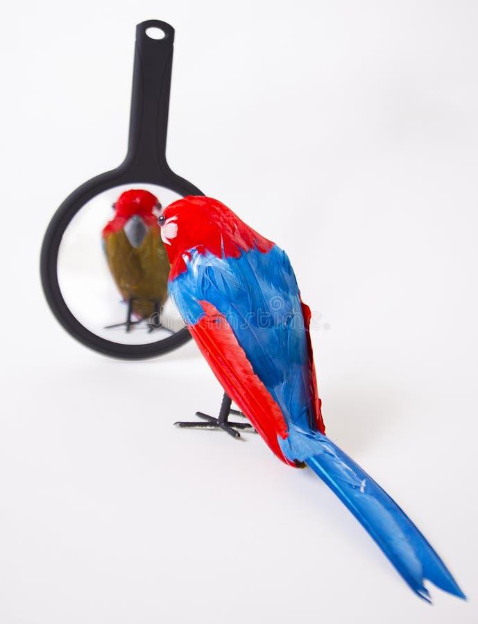看在镜子的假鹦鹉 免版税库存照片
