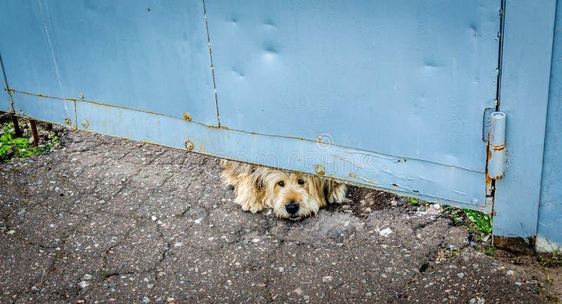 看在门下的一条哀伤的看的狗 免版税图库摄影