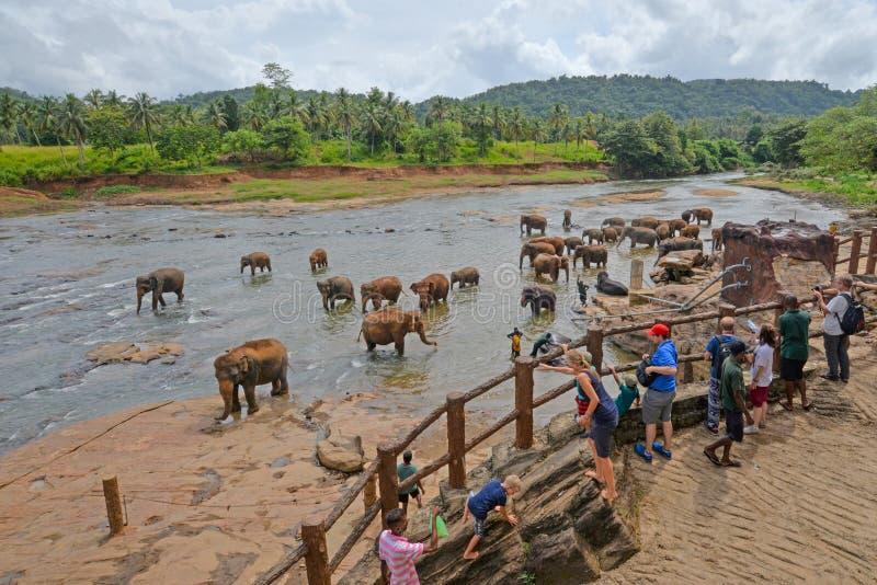 看大象的游人沐浴在河,斯里兰卡 免版税库存照片