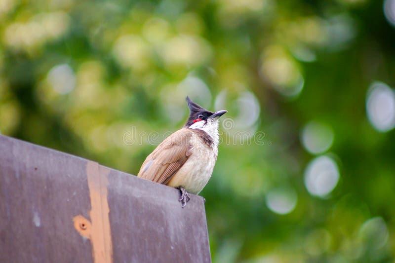 看天空有绿色背景的逗人喜爱的鸟 免版税库存图片