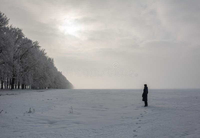 看太阳的孤独的妇女与冷淡的橡木行的领域在冬天 库存图片