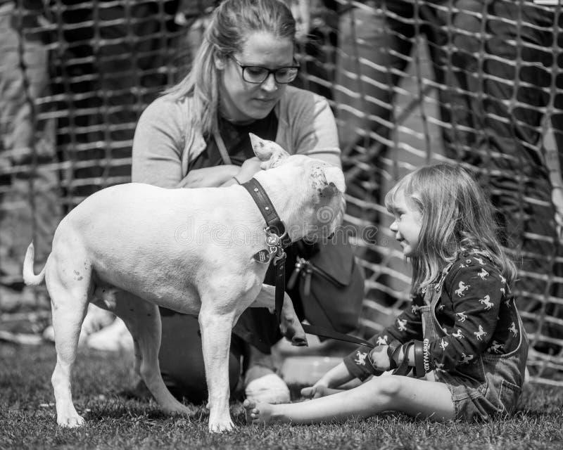 看她的与她的母亲的女孩狗后边在公园狗展示 库存照片