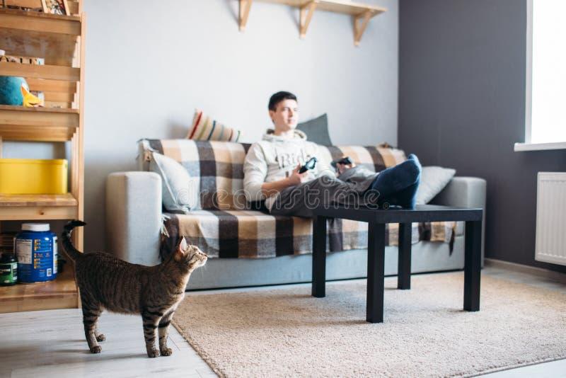 看它的主人的猫在电子游戏的赌博 库存照片