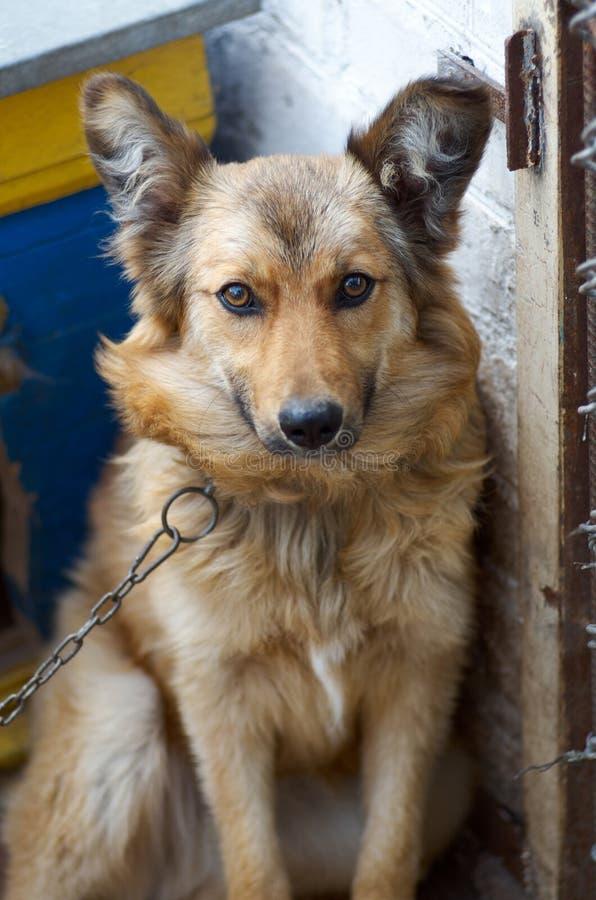 看对与愉快的面孔的照相机的一条大狗的画象 库存图片