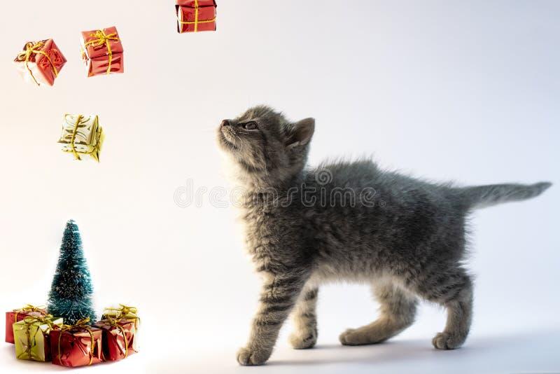看对从空气的落的礼物的逗人喜爱的灰色猫 库存图片