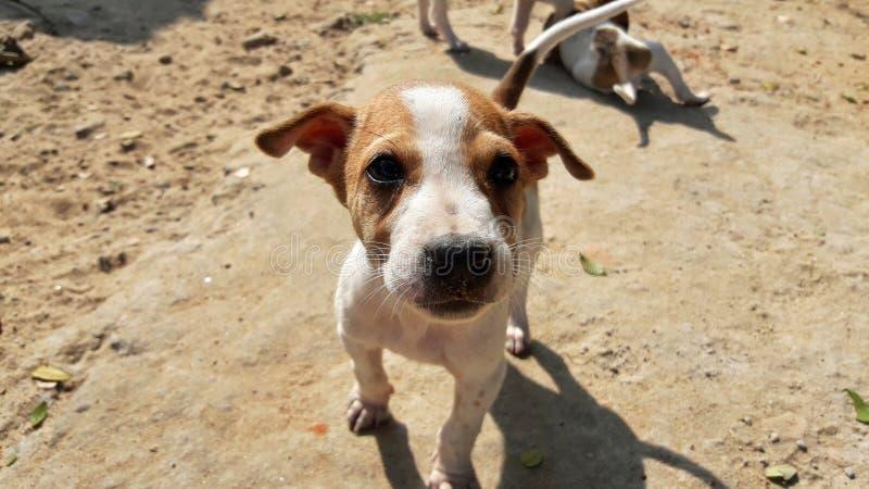 看对照相机的小小狗 免版税库存照片