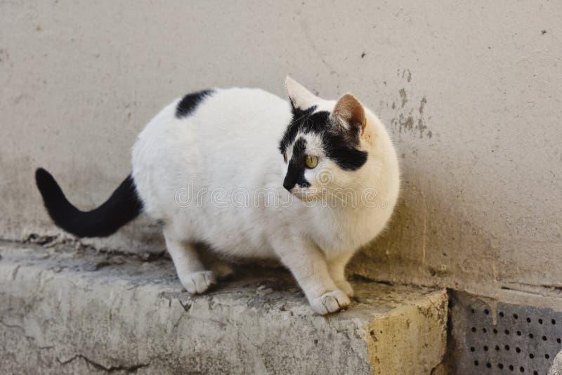 看对鸟的猫 免版税库存照片