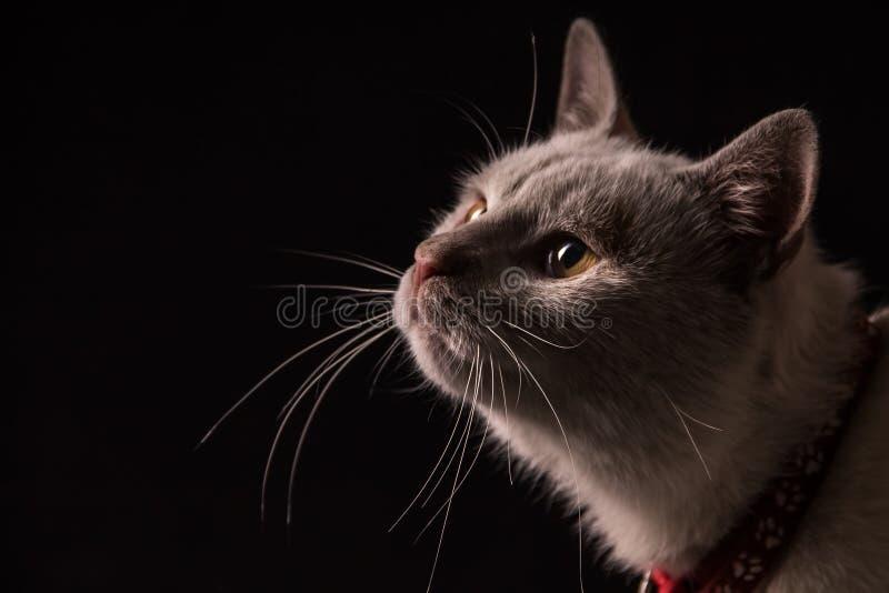 看您的猫眼 免版税库存照片