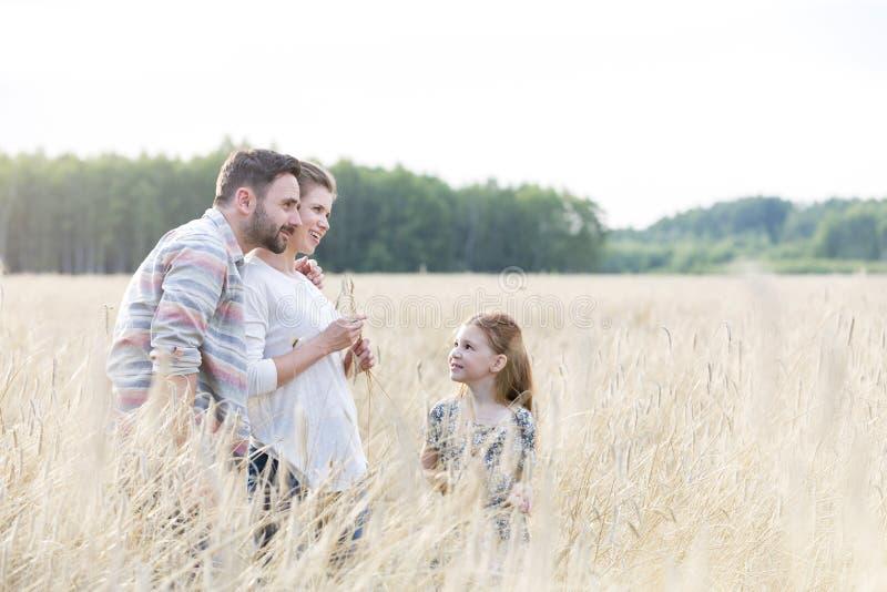 看慈爱的父母的女孩站立在麦子农场 库存照片