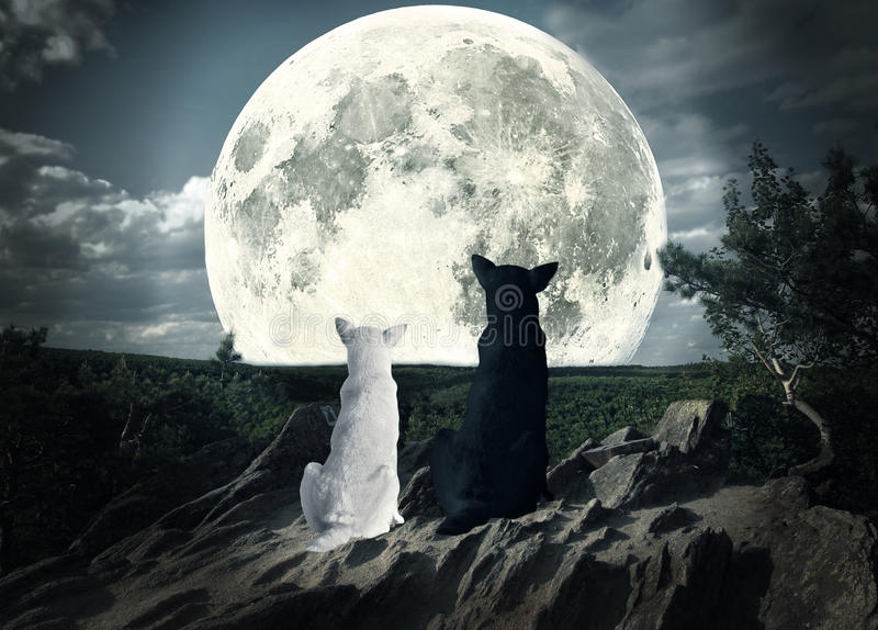 看月亮的两条狗 库存照片