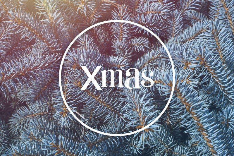 看板卡快活圣诞节的问候 xmas 背景,分支蓝色云杉 免版税库存照片