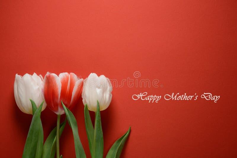 看板卡日母亲s 在红色背景的白色郁金香 免版税库存照片