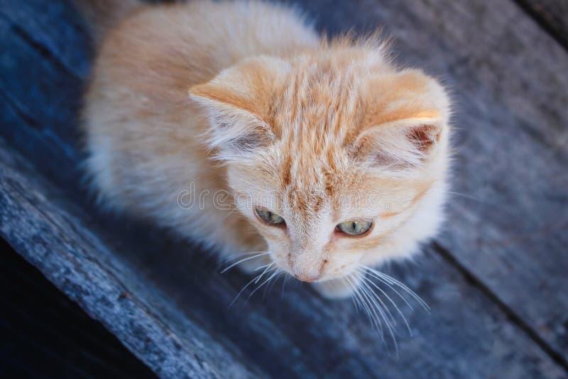 看某事的大角度观点的模糊的橙色平纹小猫外部照相机视图 图库摄影