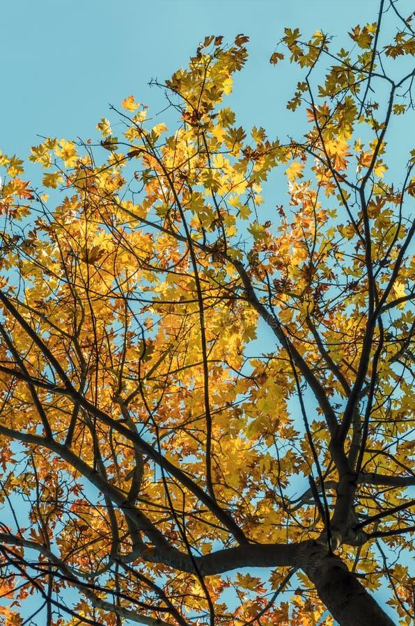 看法从下面在秋天森林,照亮由阳光, yello 库存图片