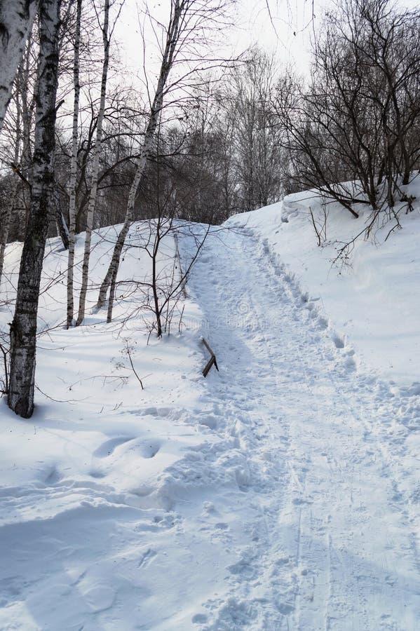 看法从下面在雪倾斜小径 库存照片