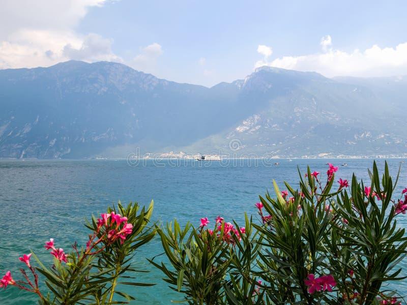 看法向有夹竹桃夹竹桃灌木和一艘渡轮的花的加尔达湖在前景的在背景中 免版税图库摄影