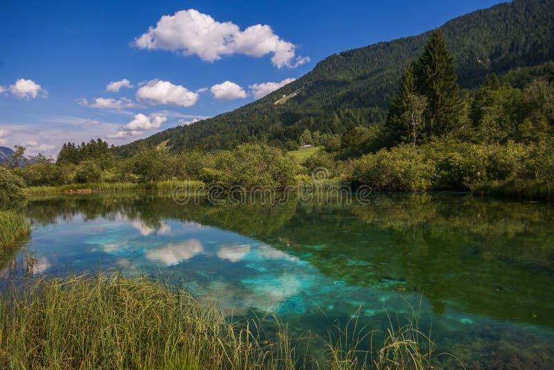 看法在鲜绿色的清楚的河夏天在山森林里在阳光Zelenci斯洛文尼亚下 库存图片
