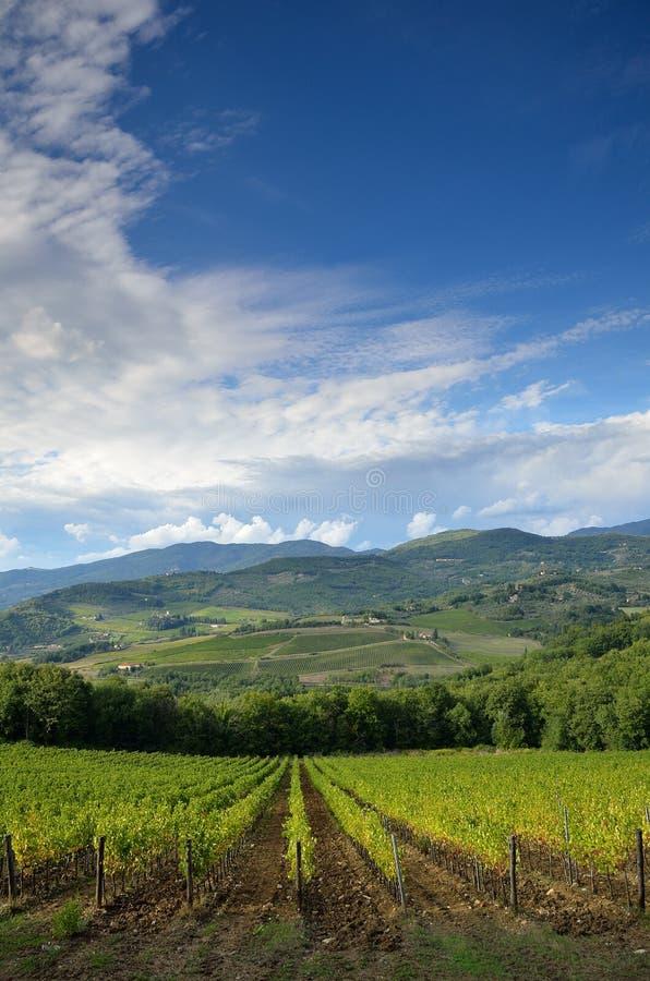 看法美丽的绿色葡萄园在Chianti 库存图片
