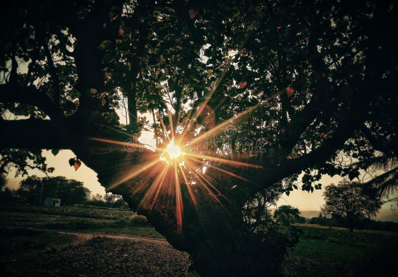 看法美丽sunstar通过树 图库摄影