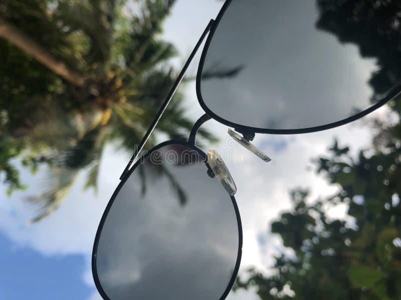 看法通过对南部的天空和棕榈树的太阳镜,感觉休闲 库存照片