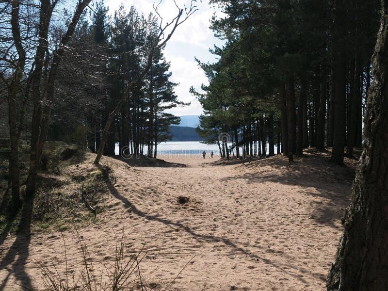 看法通过树&沙丘向海湾Morlich 免版税库存图片