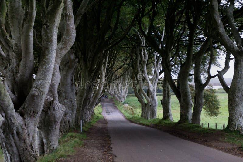 `看法黑暗在爱尔兰修筑树篱` 免版税图库摄影