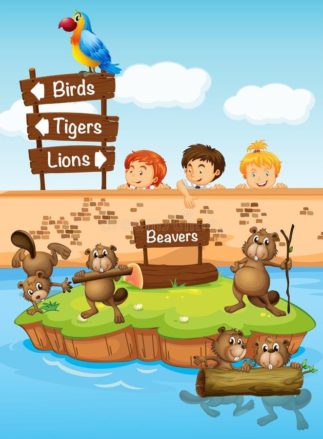 看海狸的孩子在动物园里 皇族释放例证
