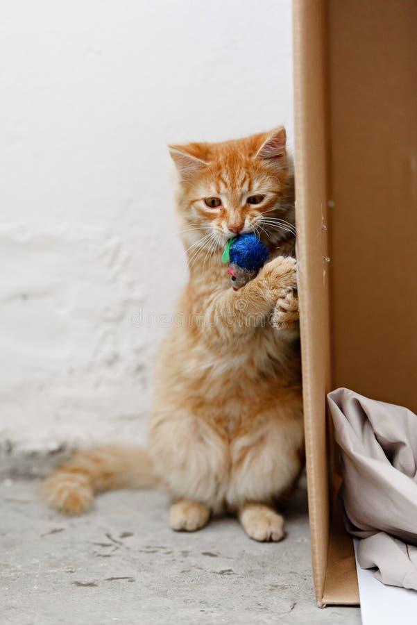 看照相机和戏剧的逗人喜爱的无家可归的小猫 免版税库存照片