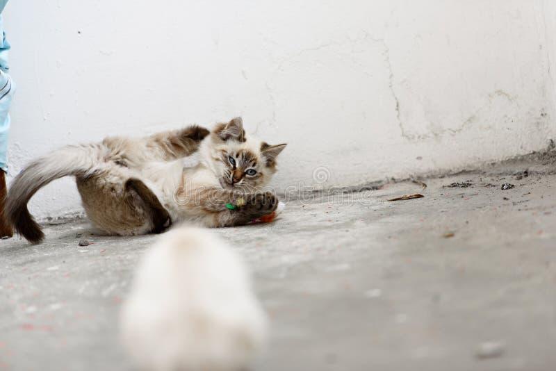 看照相机和戏剧的逗人喜爱的无家可归的小猫 免版税图库摄影