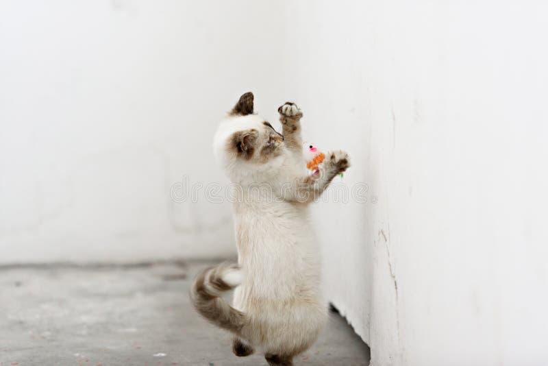 看照相机和戏剧的逗人喜爱的无家可归的小猫 免版税库存图片
