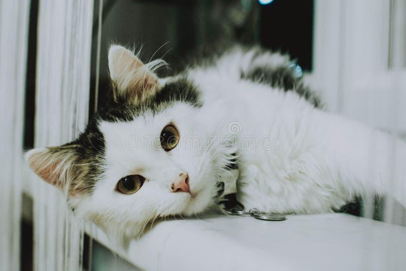 看照相机的一只白色猫的近射放置在白色表面 免版税图库摄影