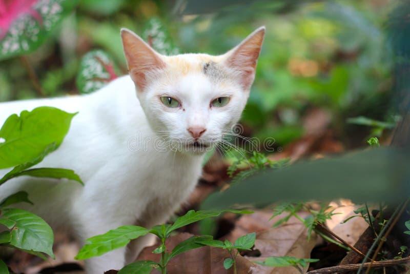 看照相机的一只逗人喜爱的猫 图库摄影