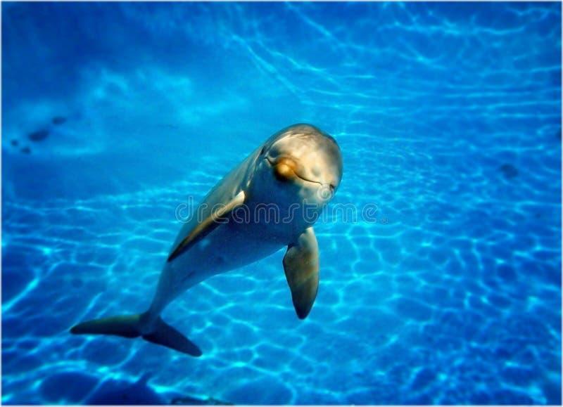 看照相机的海豚 免版税库存图片