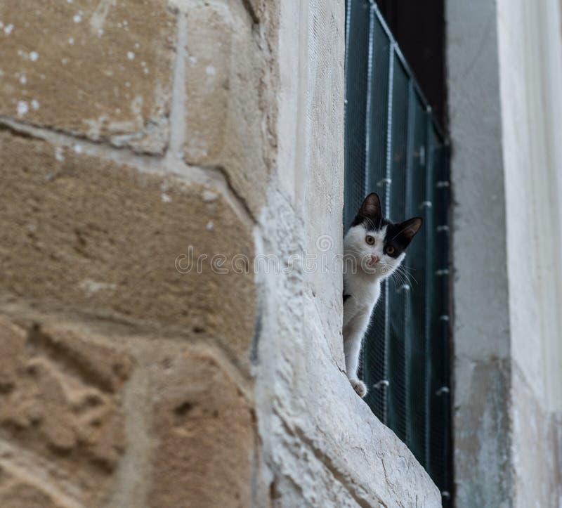 看照相机的猫 免版税图库摄影