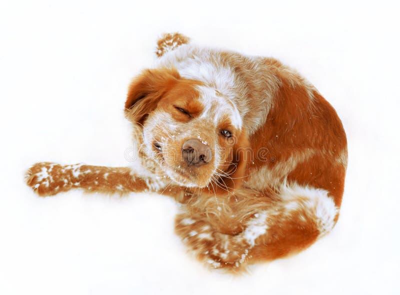 看照相机的红色狗 免版税库存照片