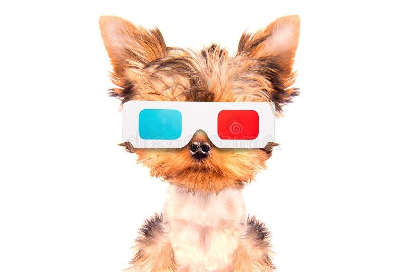 去看电影的狗 库存图片