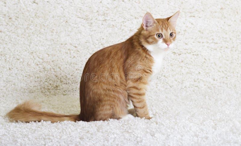 看的猫斜向一边 库存照片
