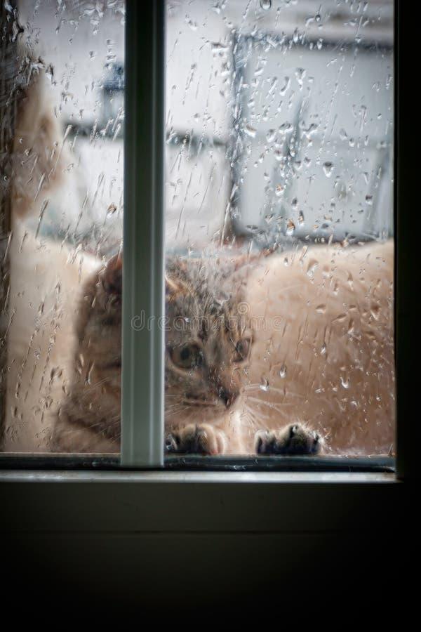 看窗口的猫雨 免版税库存图片