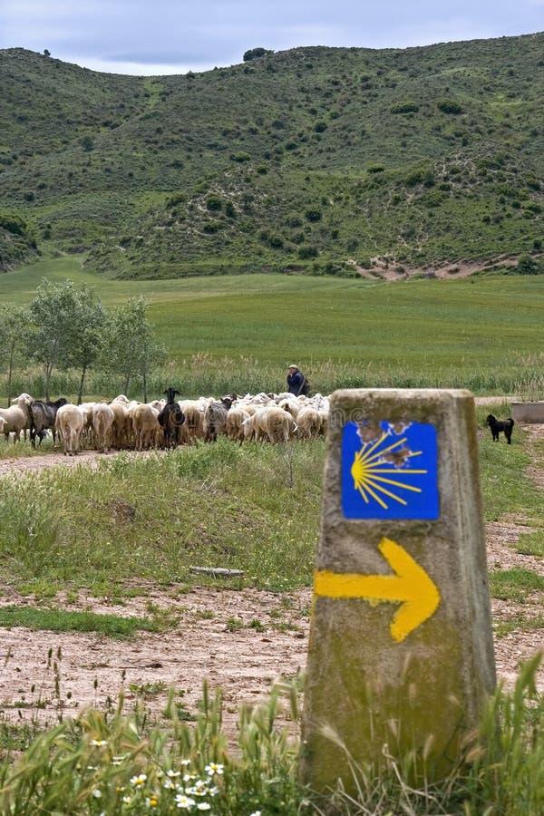 看管与绵羊群在自然风景的 图库摄影