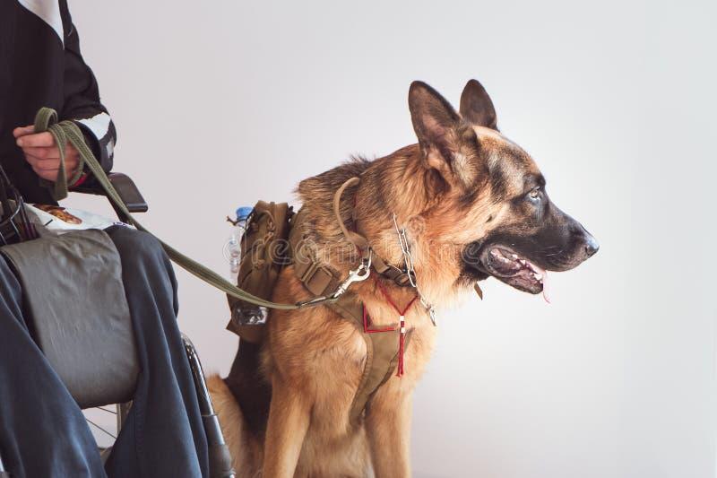 看管,为狗服务与所有者无效 免版税库存照片