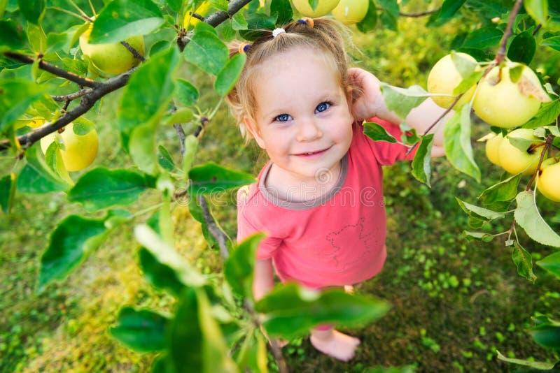 看苹果的逗人喜爱的小女孩 免版税库存照片