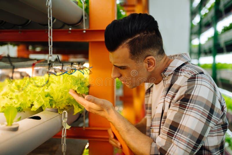 看莴苣的农业学家,当站立自温室时 免版税库存图片