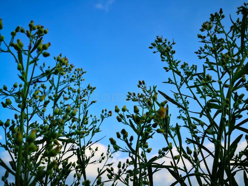 看蓝天有云彩背景通过自然 库存图片