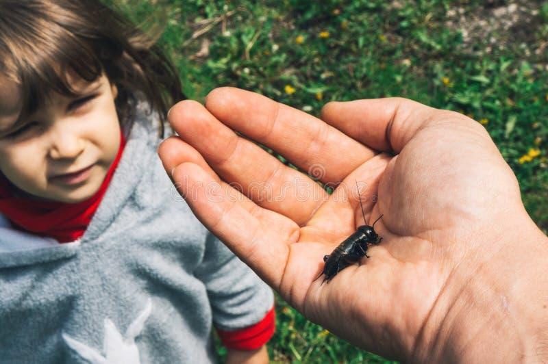 看蟋蟀的女孩 库存图片