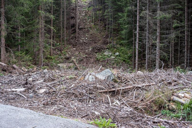 看见了裁减与年圆环的树干并且看见了尘土 库存图片