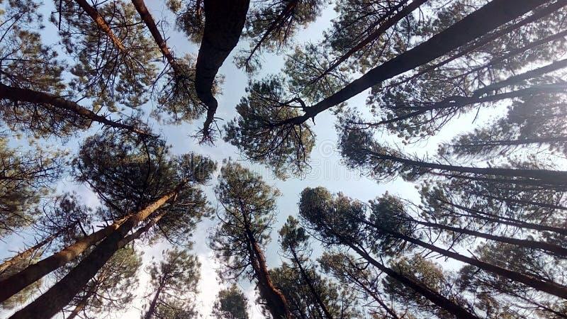 看见美妙的森林的一最佳的斑点 库存照片