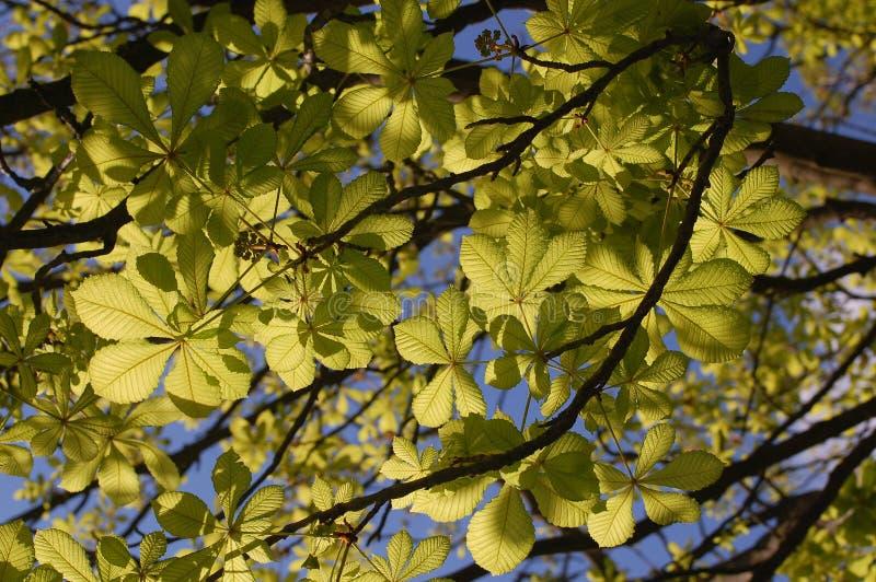 看见绿色叶子的查寻 免版税库存照片