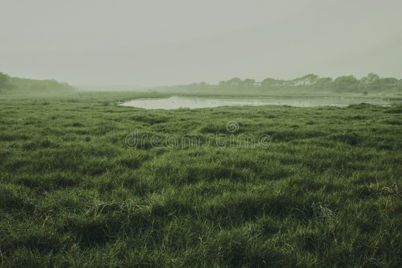 看起来印度草的土地令人敬畏 免版税库存照片