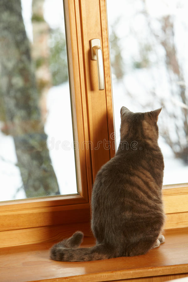 看起来坐的多雪的视图视窗的猫壁架 库存图片
