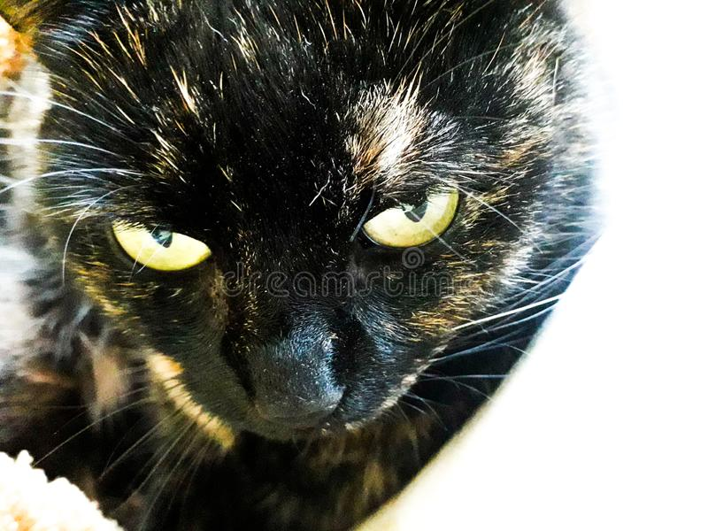 看起来我的猫逗人喜爱 图库摄影